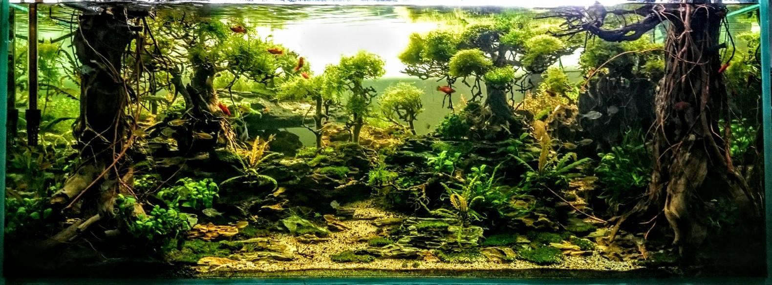 Nguồn gốc ít ai biết của những cây Bonsai trang trí hồ cá