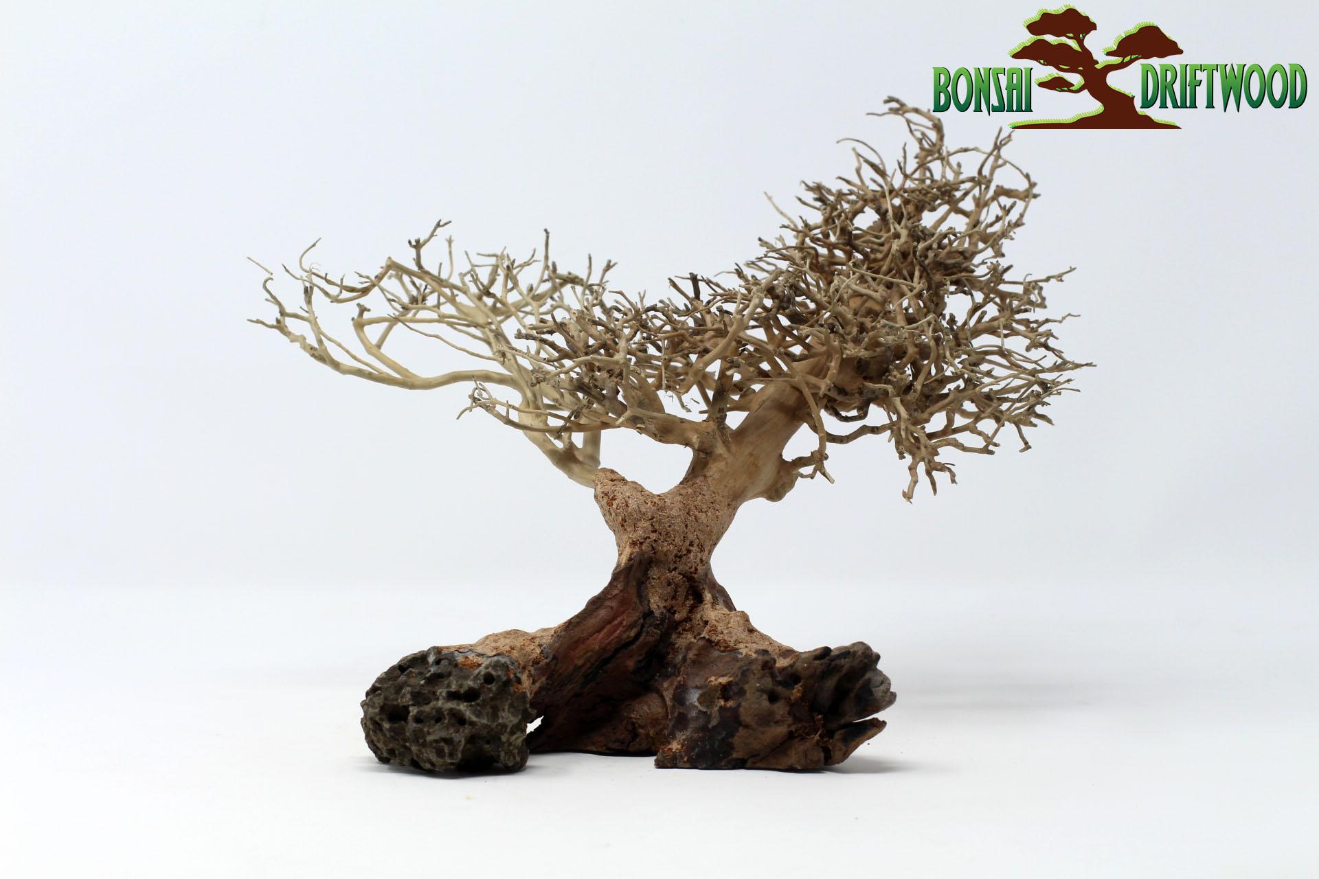 Một mẫu Bonsai driftwood natural tái chế từ các mẩu gỗ nhỏ, đẹp, độc, lạ được rao bán trên website https://bonsaidriftwood.com/ với giá 42$