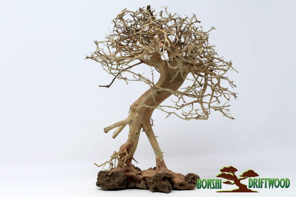 Một sản phẩm Bonsai driftwood natural khác được tạo hình khá giống dáng người, bảo đảm tính độc đáo và thẩm mỹ cho tiểu cảnh, hồ cá của bạn. Sản phẩm này cũng được rao bán trên website https://bonsaidriftwood.com/ với giá 73$